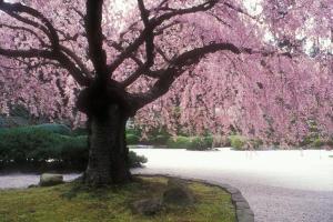 The Flat Garden in the Japanese Garden, Portland Photo from the Portland Japanese Garden website.
